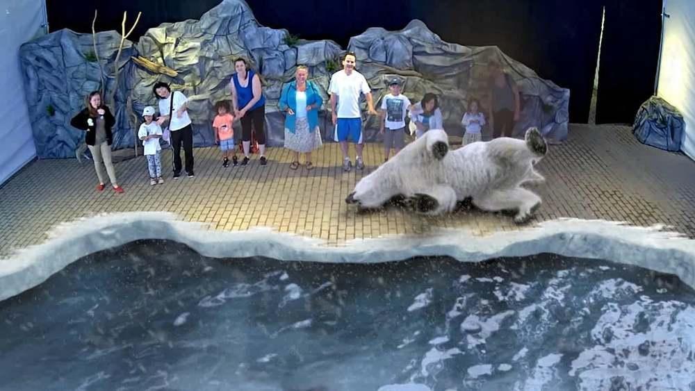 Zoo exeperience realite-augmentee.co